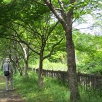 楽しい園芸 新緑の並木道