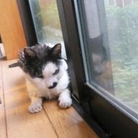 赤堀菖蒲園406歳ツアー、今年初めてのマタケ料理、キキはエノコログサで遊んで窓辺猫…