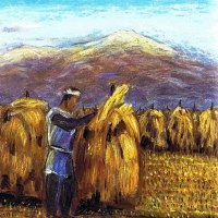 98. 稲の杭干し