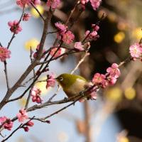 春はもうすぐ~