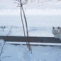 のら猫の糞して居るや冬の庭  子規