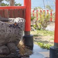 長崎鼻パーキングガーデンはやっぱりコンゴウインコのパラダイスだった~鹿児島旅行2