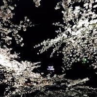 お花見JK(*^^*)お花見男子(*^▽^*)