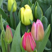 春の色♪ (10)