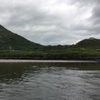 マングローブ原生林をカヌーで行く の巻
