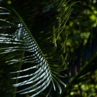 Leaf vein 401