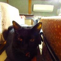 ロフトに潜む黒猫さん