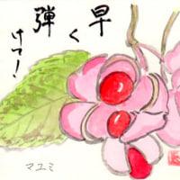 マユミ2016