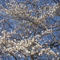 4/22(土)のPACニュース~追分&軽井沢周辺の情報