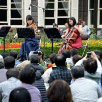 旧古河庭園、秋バラの音楽会・・1