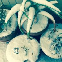 ②⓪①❼ 初 snow