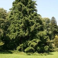 考察 「樹形」を考えてる。。5