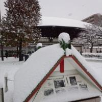 2017 京都大雪
