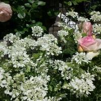苦手克服&今日のお花たち