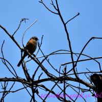 市民の森(野鳥フォトー81)