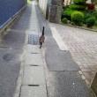 朝一で配達・猫散歩