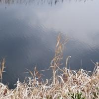 春を待つ岸辺