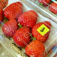 奥田さんの「奇跡の幸せイチゴ」入荷しました♪