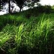 夏の草たち