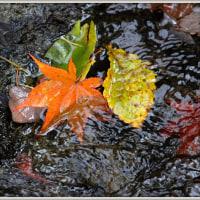 秋の切り取り