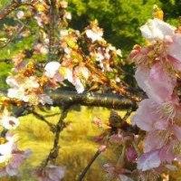 高崎自然の森:鈴懸の径