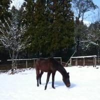 雪の中のビューテイー