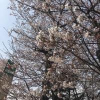4月6日の練習 ~ 桜台センター視聴覚室