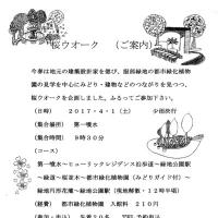 千里山「桜ウォーク」のお知らせ