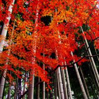 殿ケ谷戸庭園(国分寺市)の紅葉