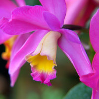 温室の花たち