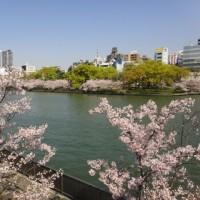 2017大阪造幣局の桜の通り抜け