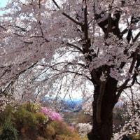 花に囲まれる宮崎公園