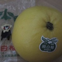 0418 熊本 八代 晩白柚