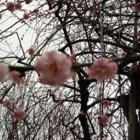 梅の鑑賞会~*