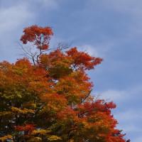 京西山の紅葉。