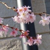 花水木が植わっていた