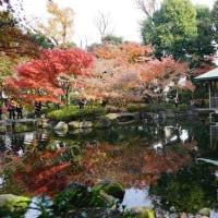 太田黒公園の紅葉 その3