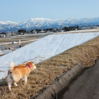 本日、立山連峰、最高の景色です。