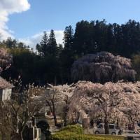 里の春(╹◡╹)