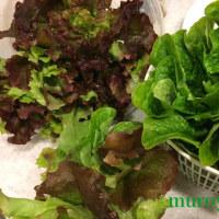 緑の食べ物