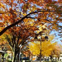 秋も深まってきました