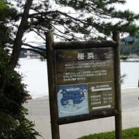 今日の竜串・桜浜