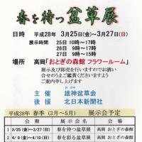 雄神盆草会春を彩る展  おとぎの森     160409(土)