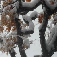 昨日は春、今日は冬