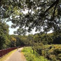 散歩道・見沼代用水東縁