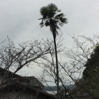 さよなら棕櫚の木