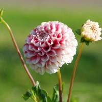 6月の花菜ガーデン1