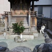 猫神社でひとやすみ