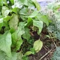 野菜の収穫が減るどころか