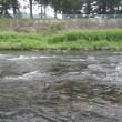7月23日 郡上杯争奪長良川鮎釣り大会参戦!